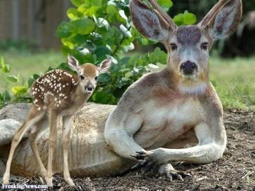 deer-kangaroo-hybrid-116835